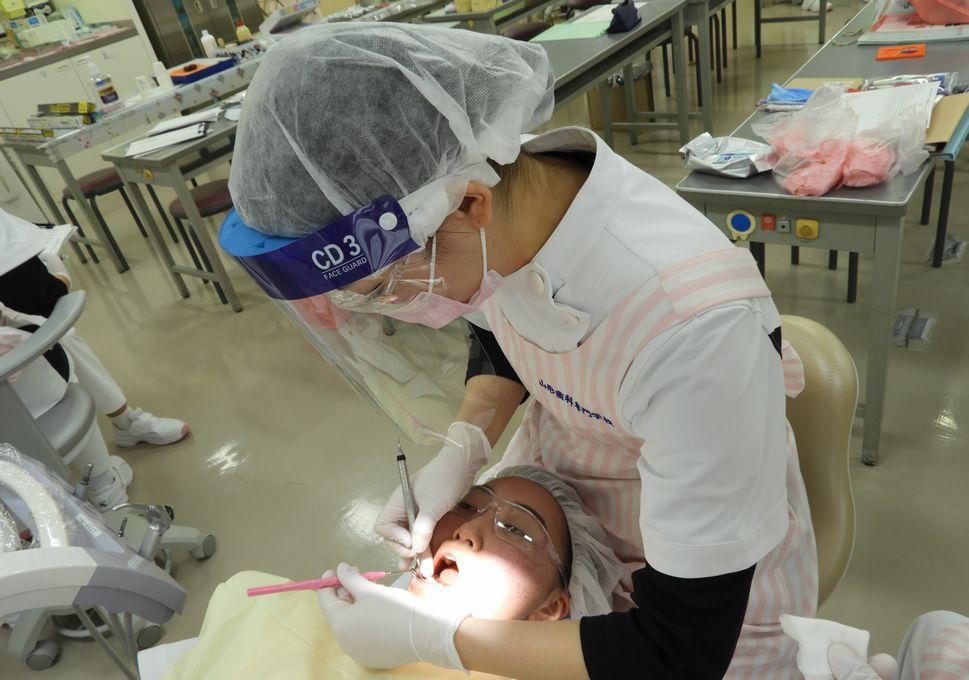 衛生 内容 仕事 歯科 士